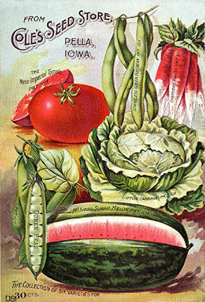 Early Rare Reproduction Art Or Artwork Of Vintage And Antique Collection Of Garden  Catalogs And Magazines