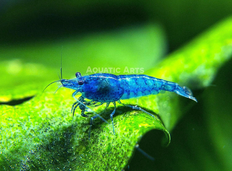 Freshwater Aquarium Fish Under 1 Inch - Amazon com aquatic arts invertebrate pellets 1 year supply food for shrimp crayfish crabs snails and more pet supplies