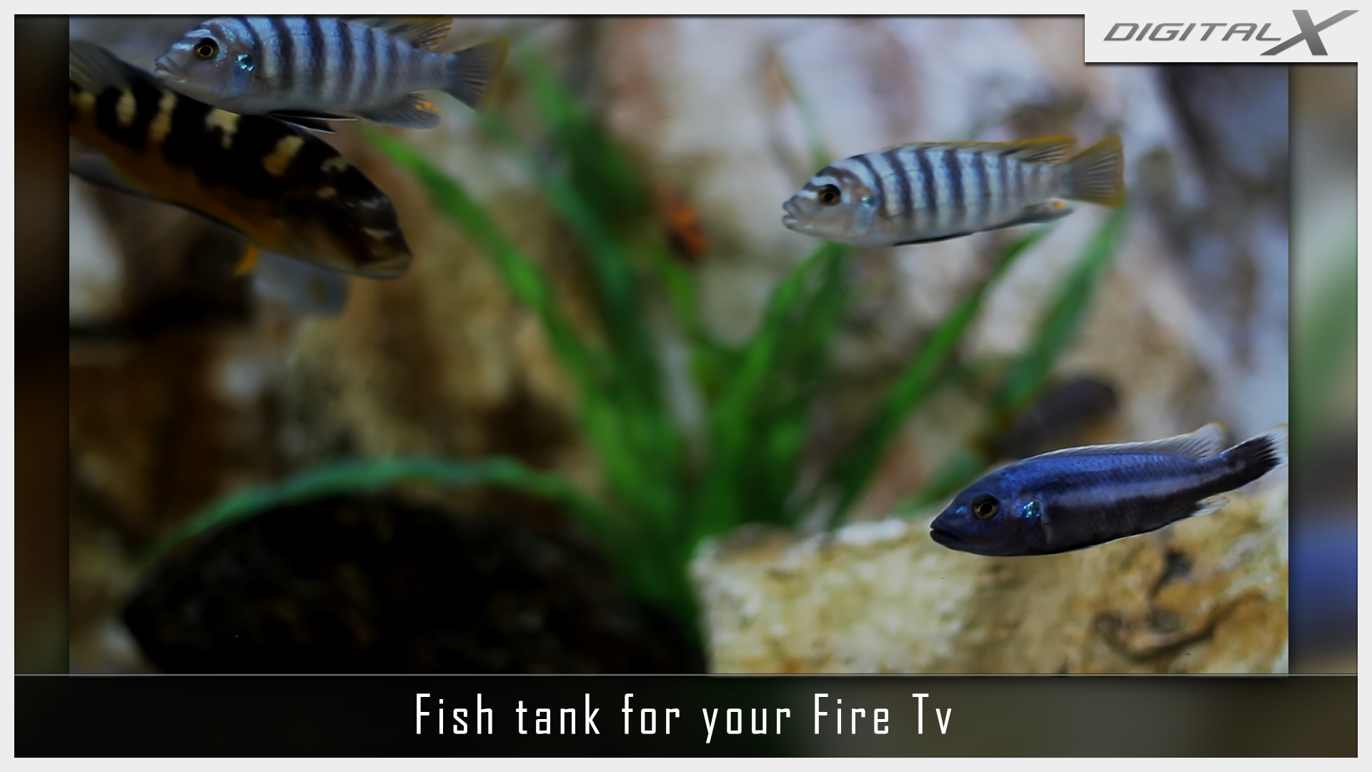 Fish tank for your tv - 0 00