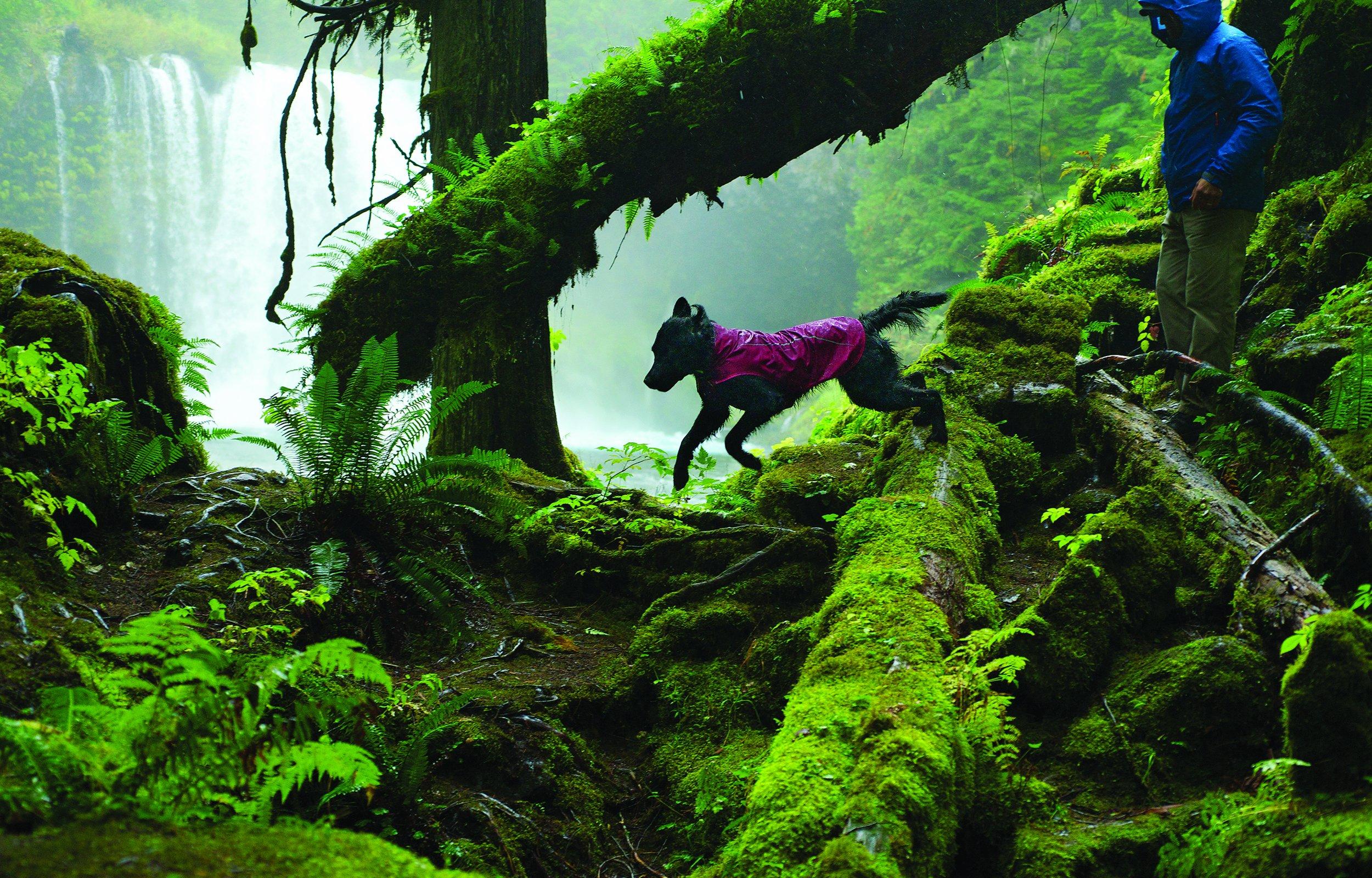 RUFFWEAR - Sun Shower Waterproof Rain Jacket for Dogs, Purple Dusk, Large by RUFFWEAR (Image #5)