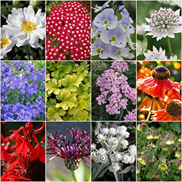 6 mixed cottage garden perennials spring and summer flowering 6 mixed cottage garden perennials spring and summer flowering plants hardy and herbaceous in mightylinksfo