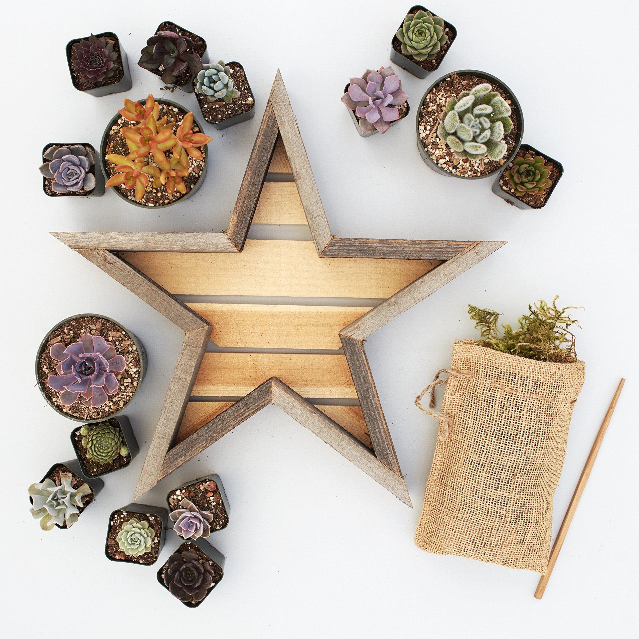 Succulent Gardens Medium Succulent Star Planter Kit, 11'' Redwood Frame, Multicolor