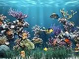 Software : Aquarium 1 [Download]