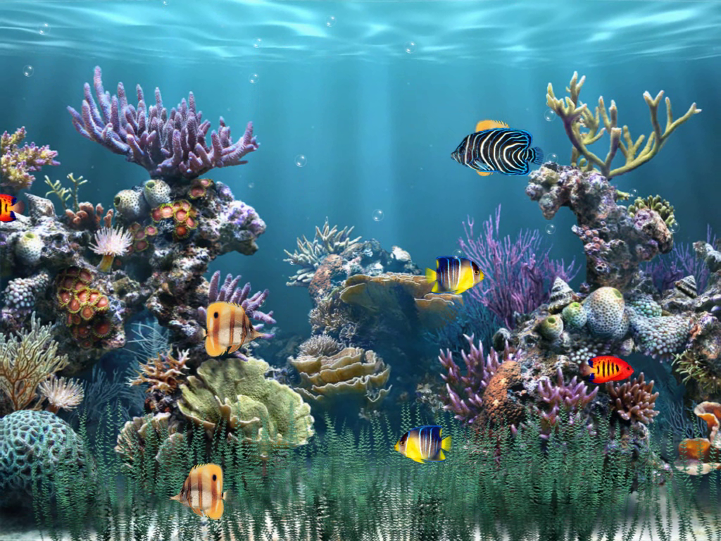 Aquarium 1  Download