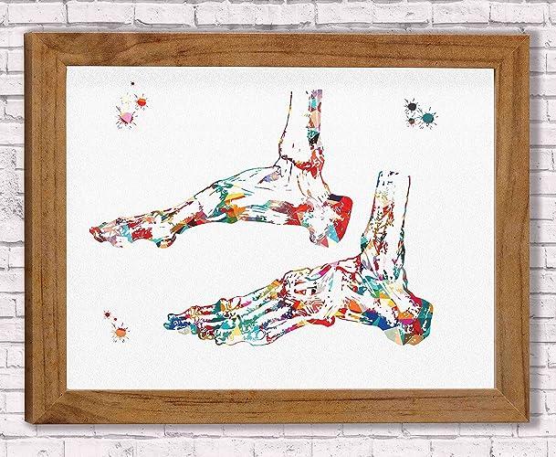 Amazon.com: Ankle Bones Watercolor Poster Art Print Ankle Ligaments ...