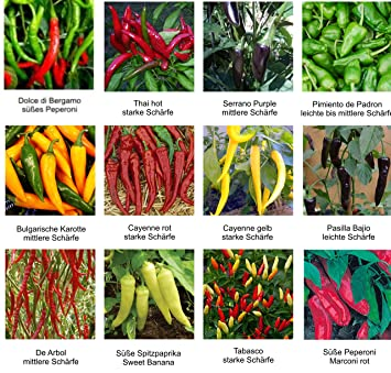 rauchiger Geschmack 10 Samen Jamaican Red Chili ideal zum Trocknen