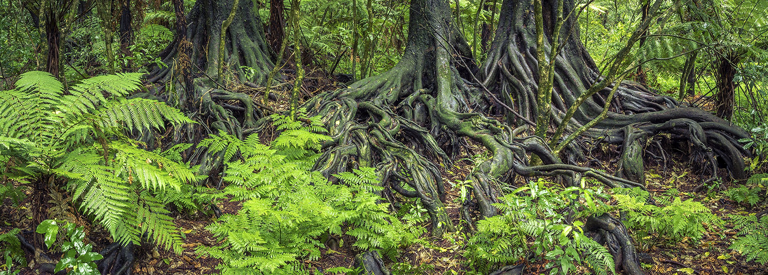 Carolina Custom Cages Reptile Habitat Background; Rain Forest Ferns & Roots for 20L, 3-sided Wraparound