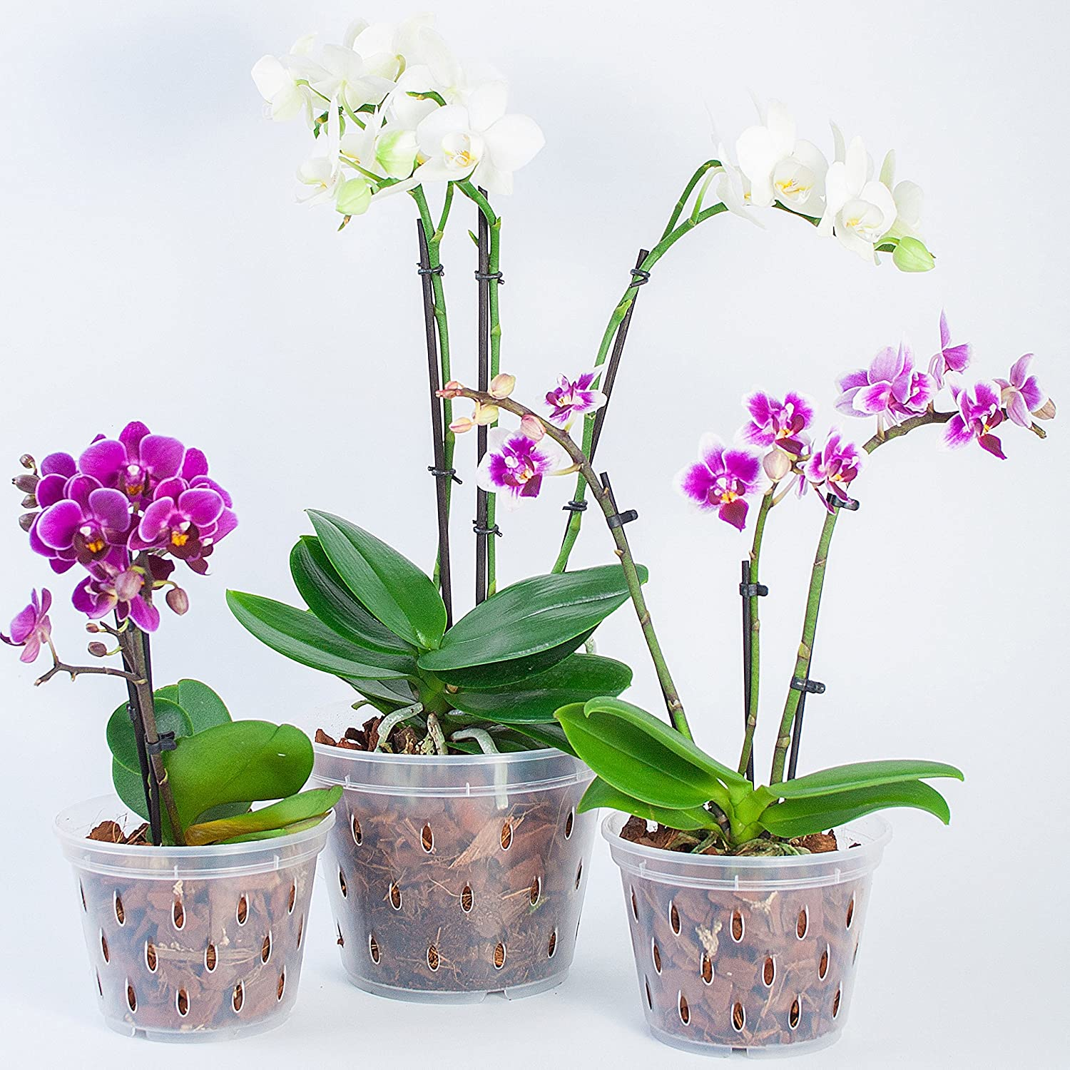 Orchid Pot-Orchid Slotted Round Clear Plastic