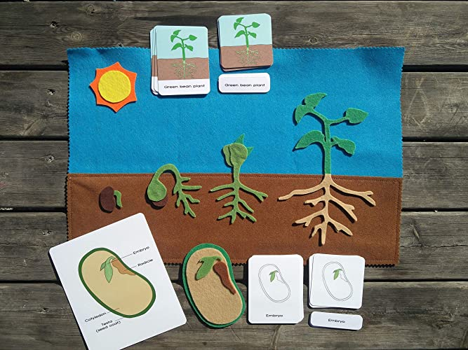 Plant Seed Parts
