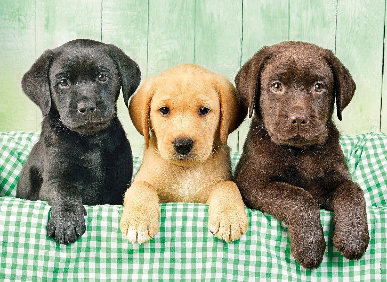 Puzzle Los 1000 Tres Piezas Clementoni Labradores39279 0mN8nw