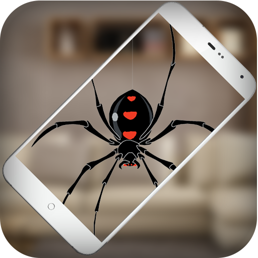 Spider Pictures - 3