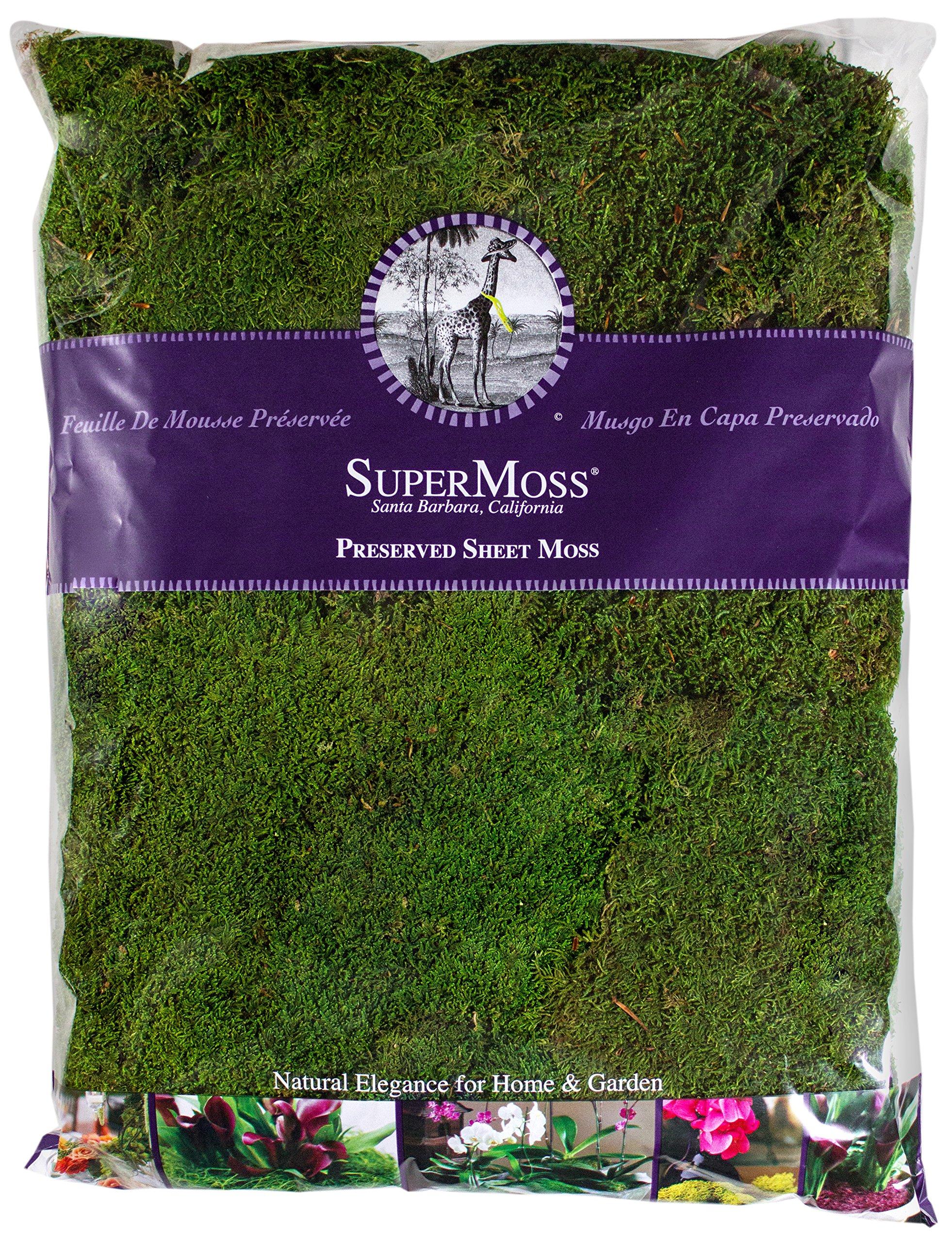 Super Moss 21585 Preserved Sheet Moss, Fresh Green, 32-Ounce by Super Moss (Image #1)