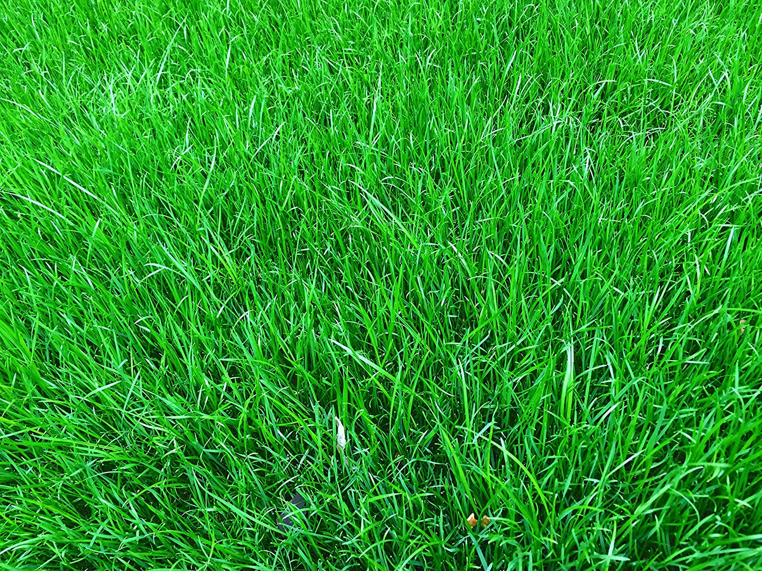Best way to plant grass seed - 1 Kg Grass Seed Covers 35 Sqm 380 Sq Ft Premium Quality Seed Fast Growing Hard Wearing Lawn Seed Tailored To Uk Climate Trademark Registered