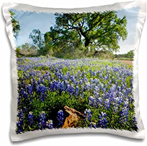 3dRose pc_146910_1 Texas Bluebonnet Flowers in Bloom, Central Texas, Use Us44 Ldi0785 Larry Ditto Pillow Case, 16