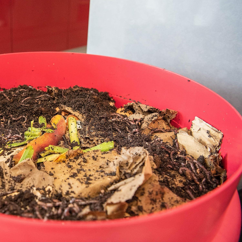 WormBox : Vermicompostador 3 bandejas Rojo - 48 litros (2 bandejas, Naranja): Amazon.es: Jardín