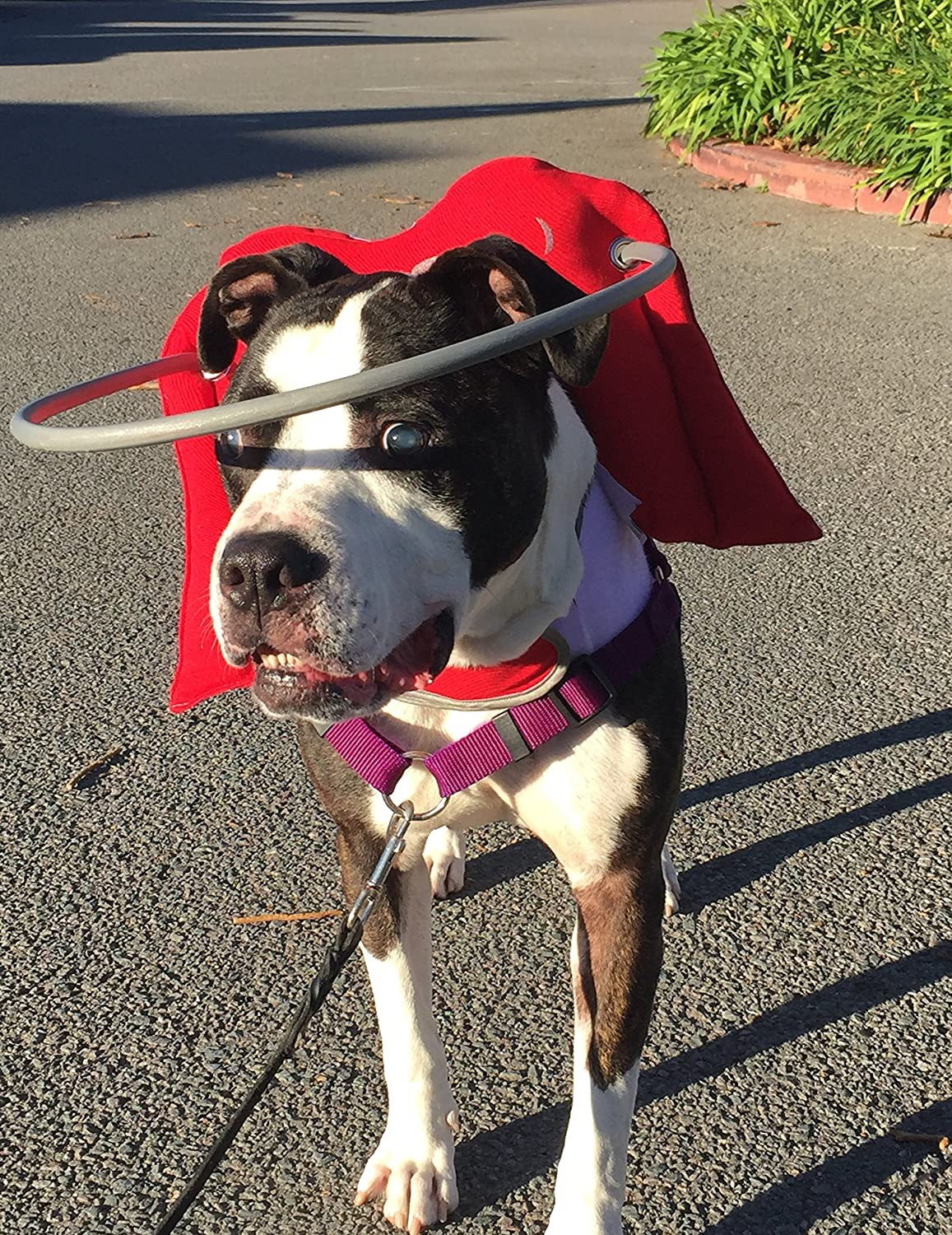 Muffin's Halo Guide For Blind Dogs - Angel Wings RED (2XL)