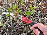 TABOR TOOLS Folding Saw with 8 Inch Curved Blade
