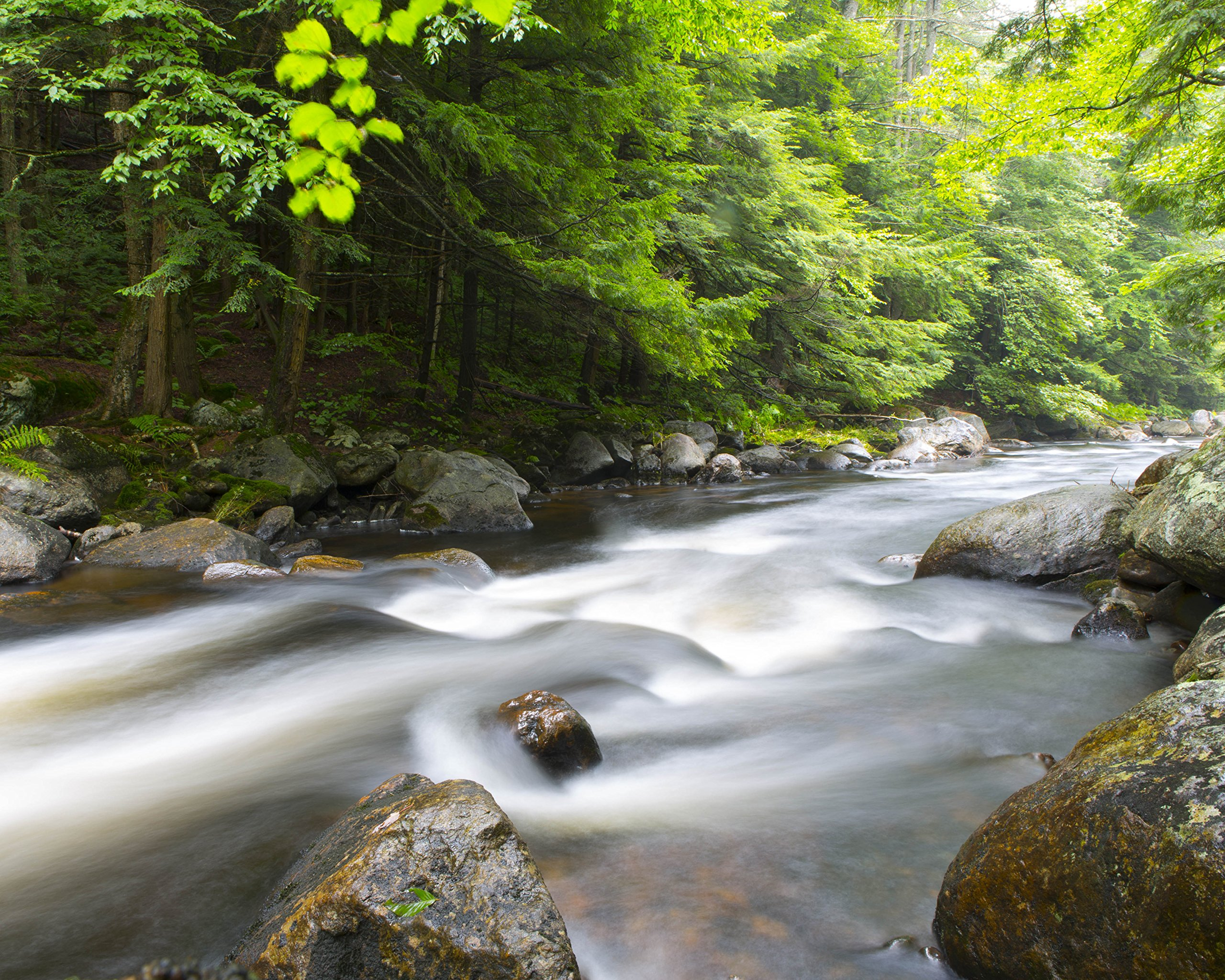 River In Forest by
