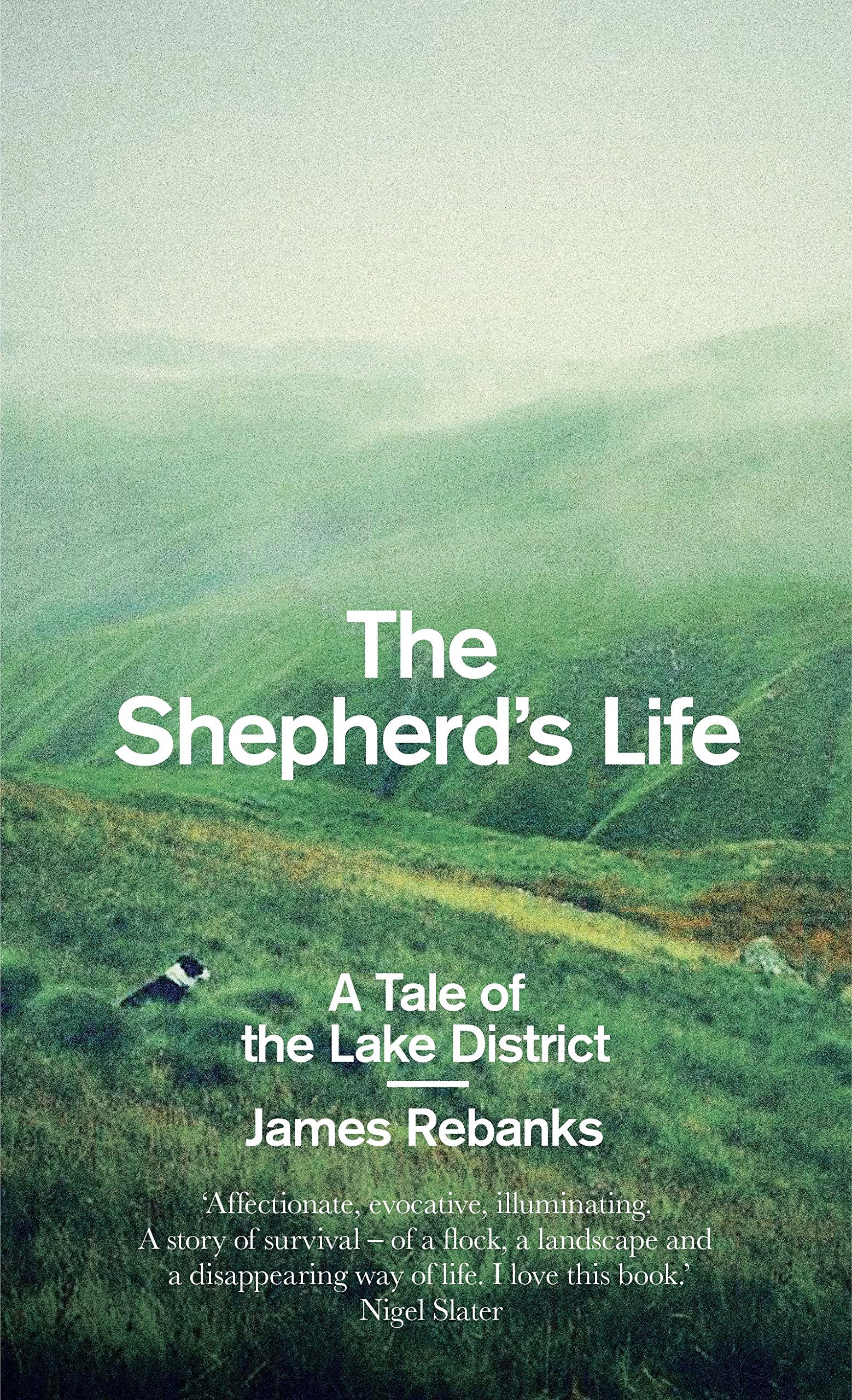 The Shepherd's Life: A Tale Of The Lake District: Amazon: James  Rebanks: 9781846148545: Books