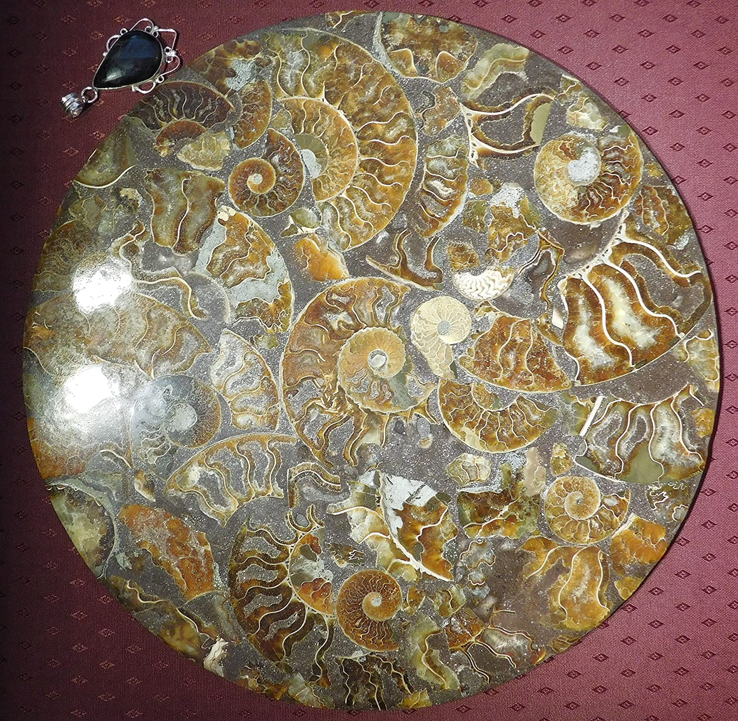 Britain-E-Spheres Crystal - LARGE 285mm x 6mm (approx. 1kg) Genuine Multiple Specimen Fossil Cleoniceras Ammonite Shell Conglomerate Disc with Bonus Rustic Hand Made Silver Plated Recycled Crystal Pendant (Tiger Iron) - ***SINGLE UNIQUE ITEM LISTING***