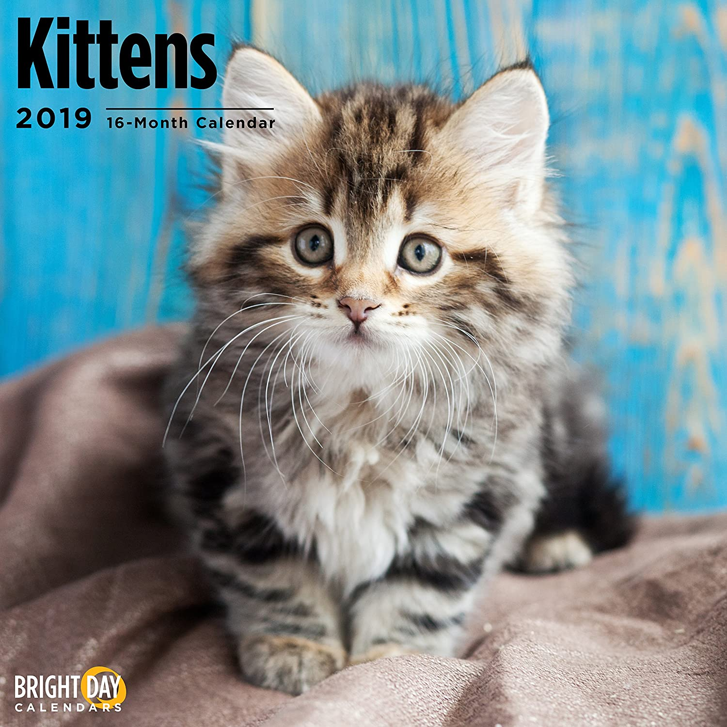 Kittens 2019 16 Month Wall Calendar 12 x 12 Inches Bright Day Calendars