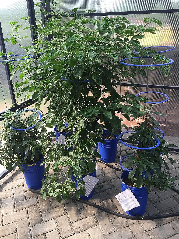 GO Hydro Flexible Tomate jaula 48 Inch Multi Nivel construir como ...