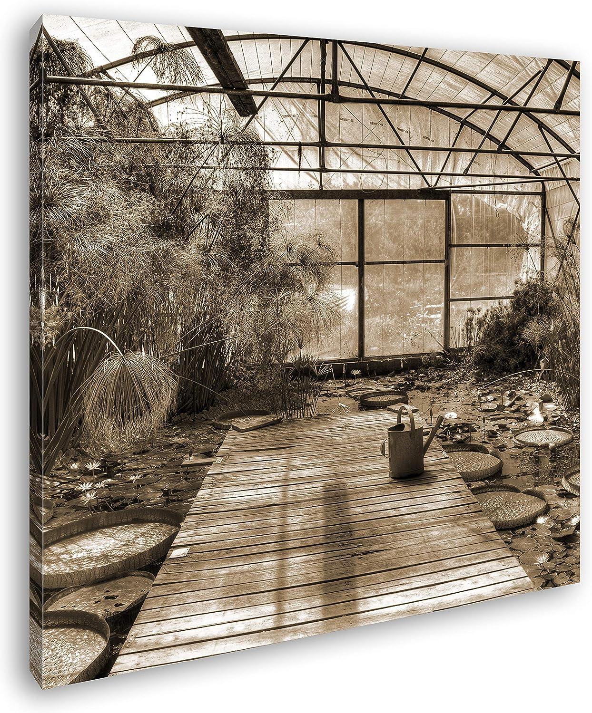deyoli Efecto Invernadero con Lotus Plantas: Sepia como Lienzo, diseño en Marco de Madera, impresión Digital Marco, no es un póster o Cartel, 70 x 70: Amazon.es: Juguetes y juegos