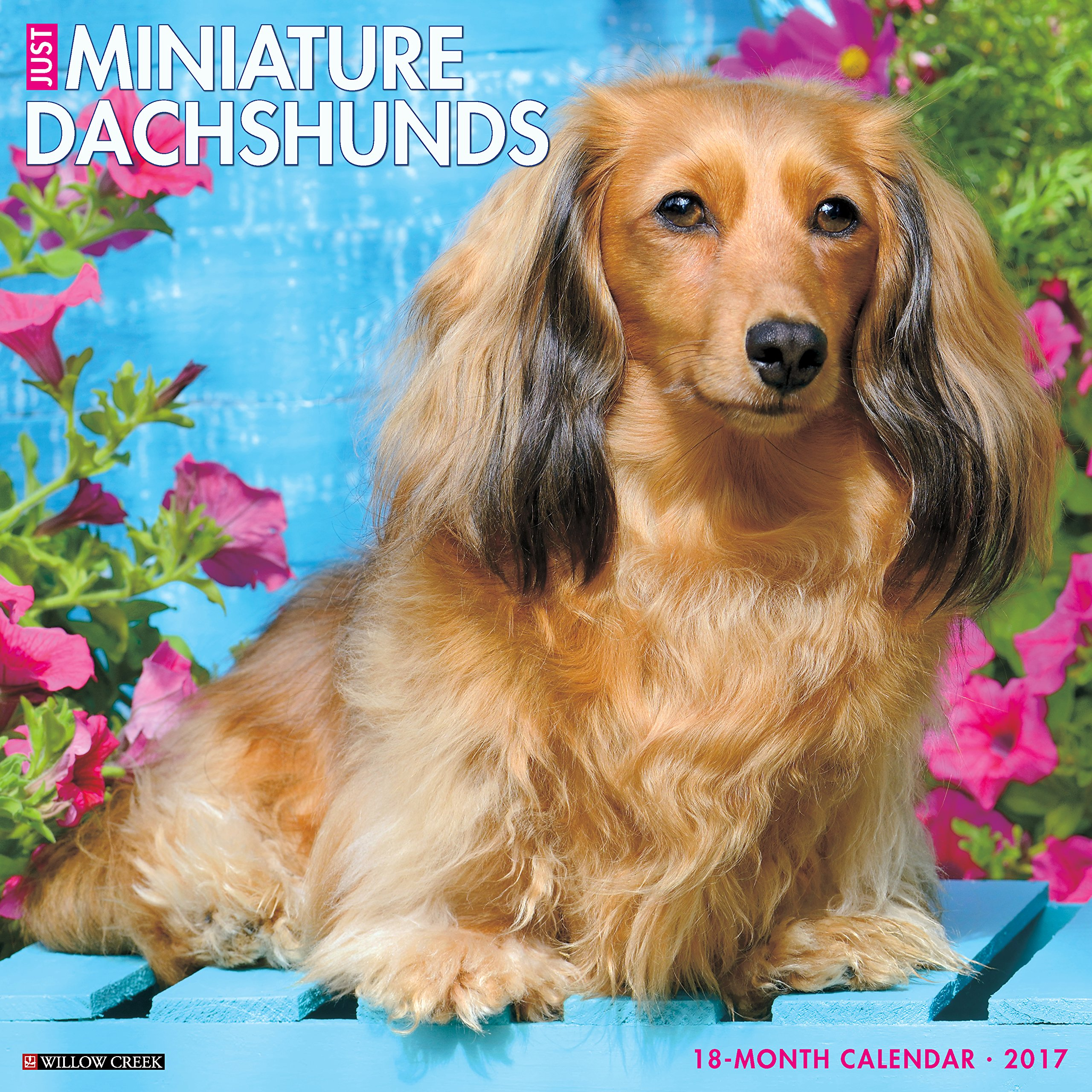 Just Mini Dachshunds 2017 Wall Calendar (Dog Breed Calendars) PDF