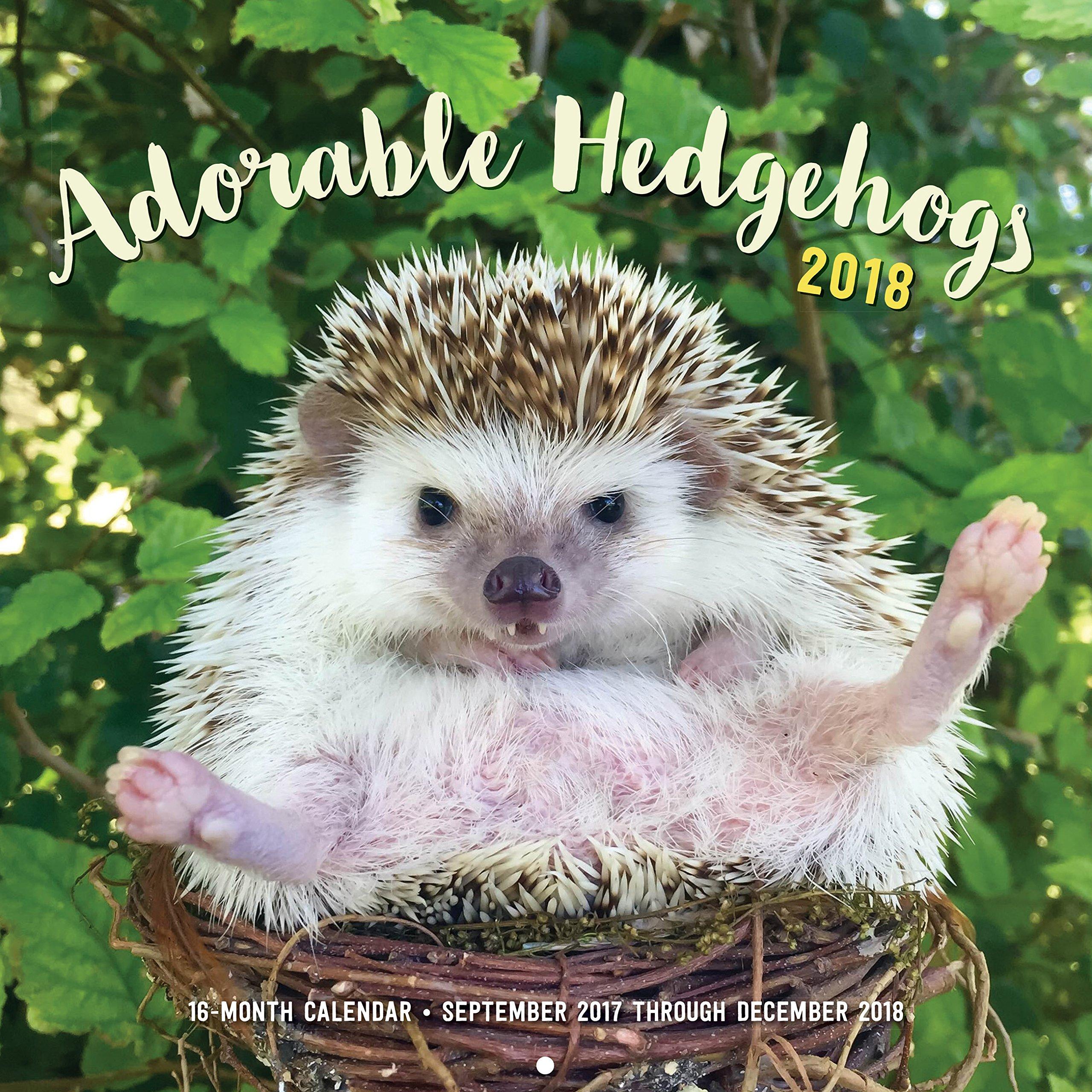 Adorable Hedgehogs 2018 (Calendars 2018)