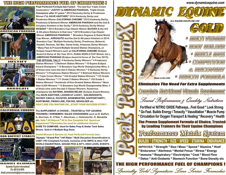 Amazon.com: Dynamic Equine Gold Signature Line