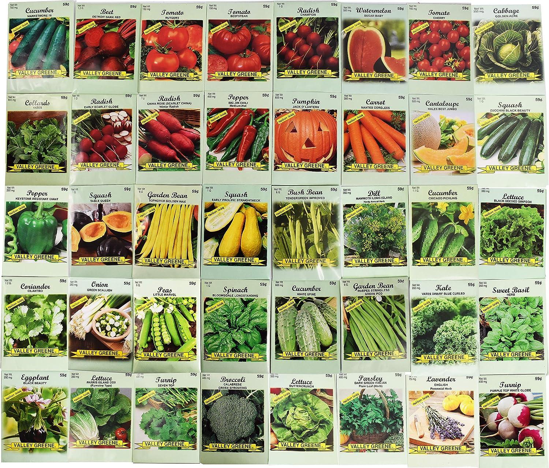 -Carrots-0.017 Gram Kit--Non-GMO-New-Seeds Made//Holland Veggies Grow Kit