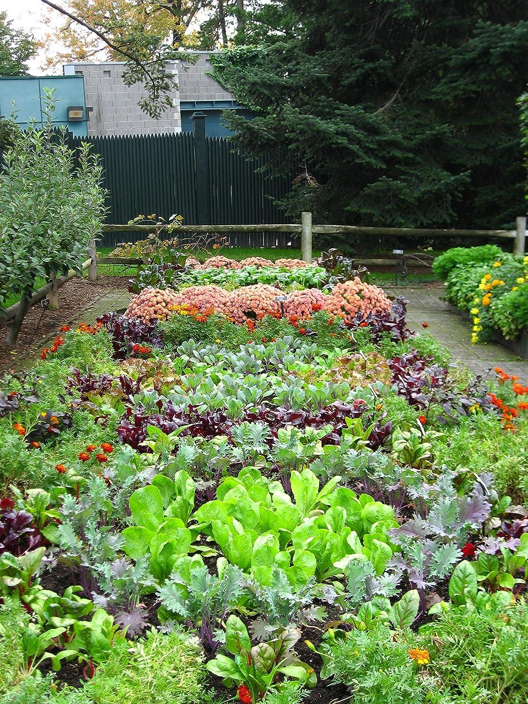 amazon com sea 90 organic fertilizer for hydroponics soil