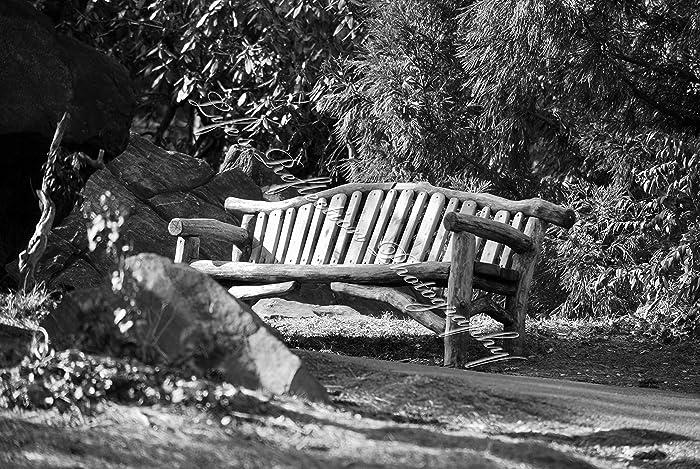 Amazon Com New York City Park Bench Photography Landscape