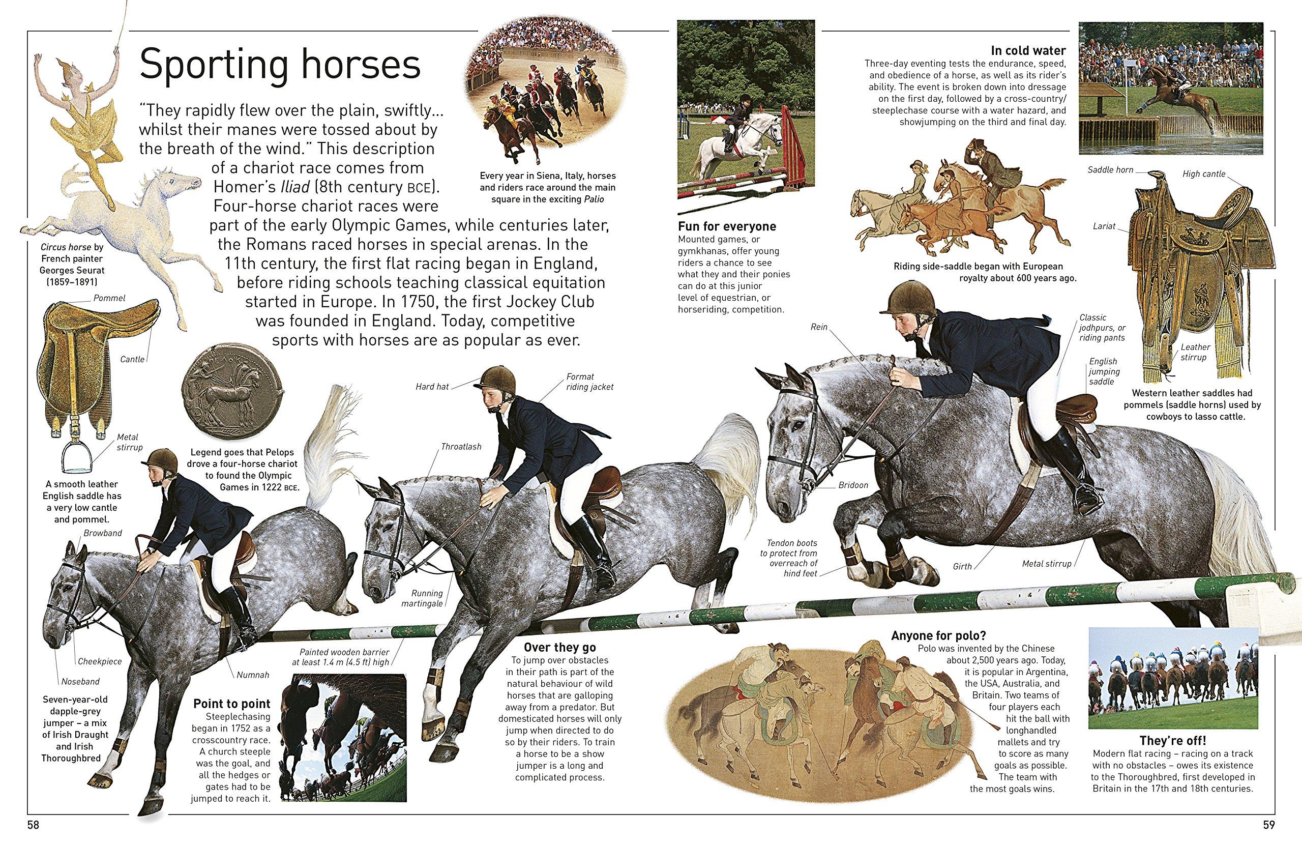 Horse (DK Eyewitness): Amazon co uk: DK: 9780241258859: Books
