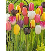 Blumenhandel Ullrich Tulpen Mischung 100 Blumenzwiebeln