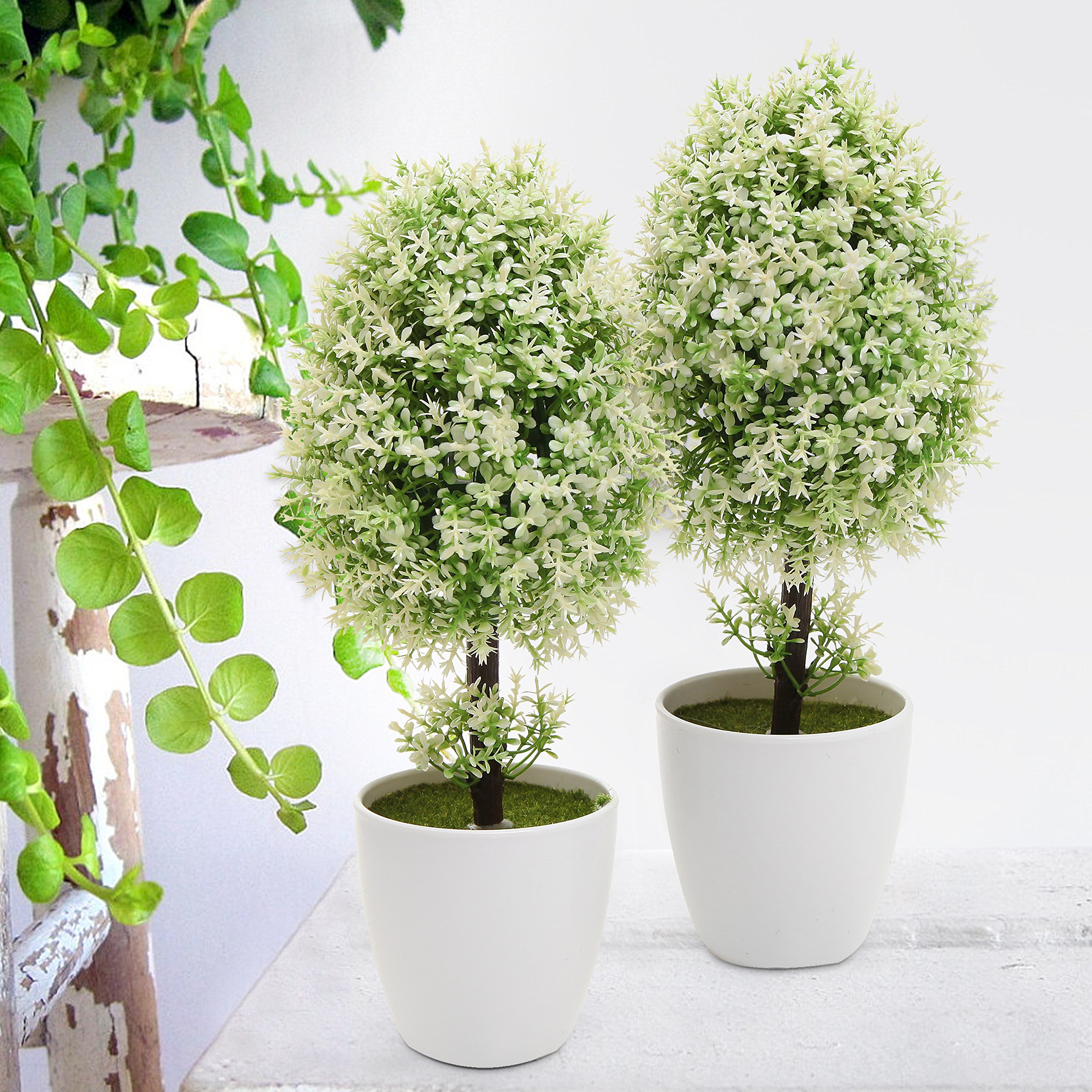Best 28+ - Potted Trees - expert advice on bay tree care ...
