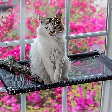Amazon.com: monkeen gato percha de ropa ventana hamaca: Mascotas