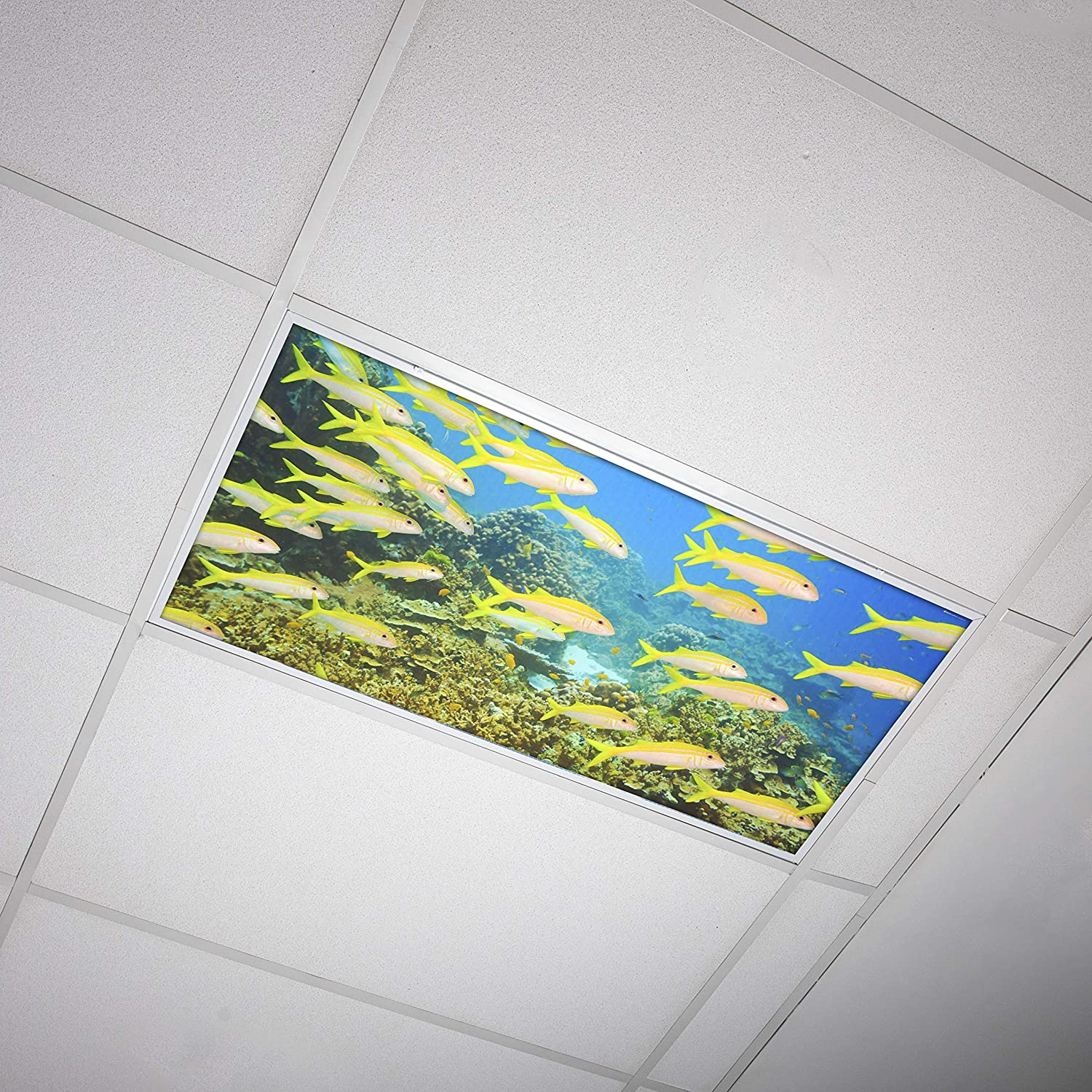 Octo Lights - Fluorescent Light Covers - 2x4 Flexible Decorative Light Diffuser Panels - Ocean - for Classrooms and Offices - Ocean 005