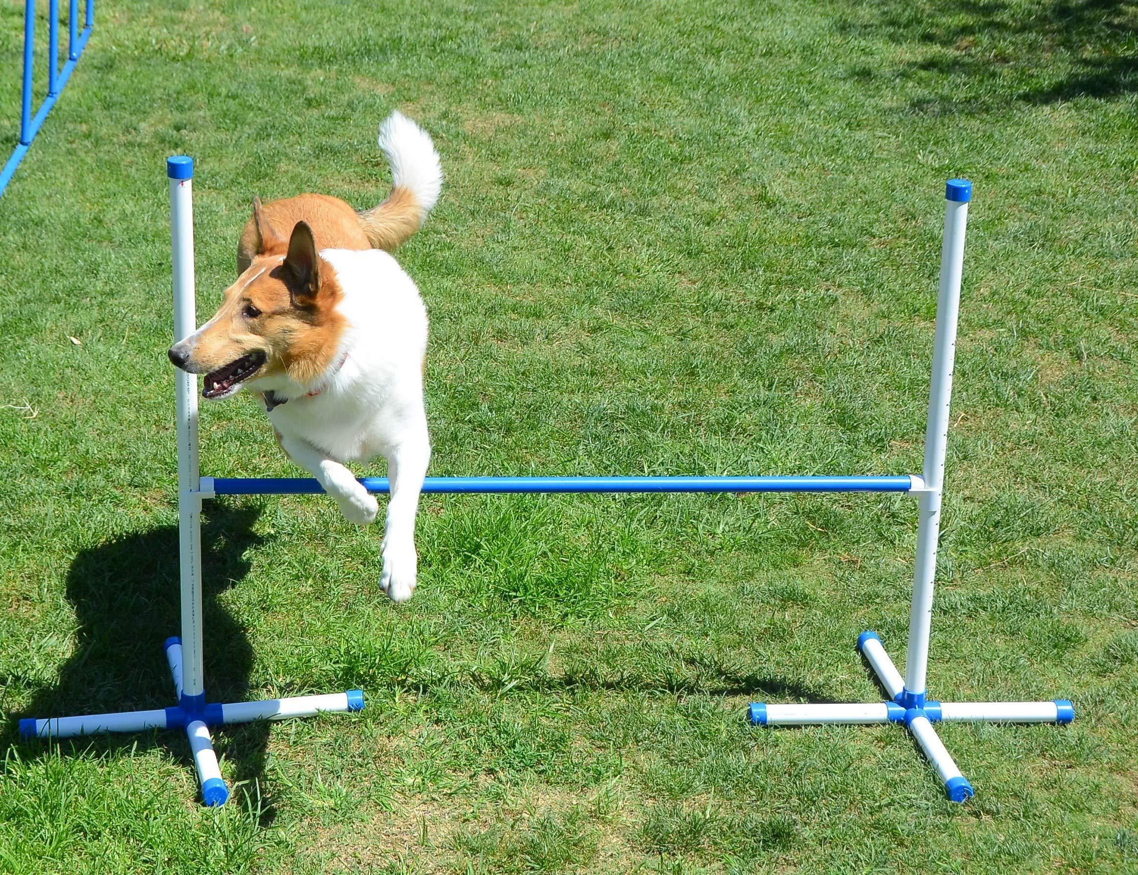 Dog Training Jump / Agility equipment / Dog Training /Dog Hurdle/Dog Agility Jump by Triple A Dogs