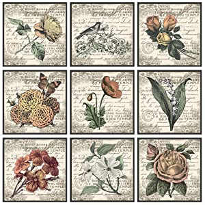 The Stupell Home Décor Collection French Botanical Illustrations 9 pc Wall Art Set, 9 Piece