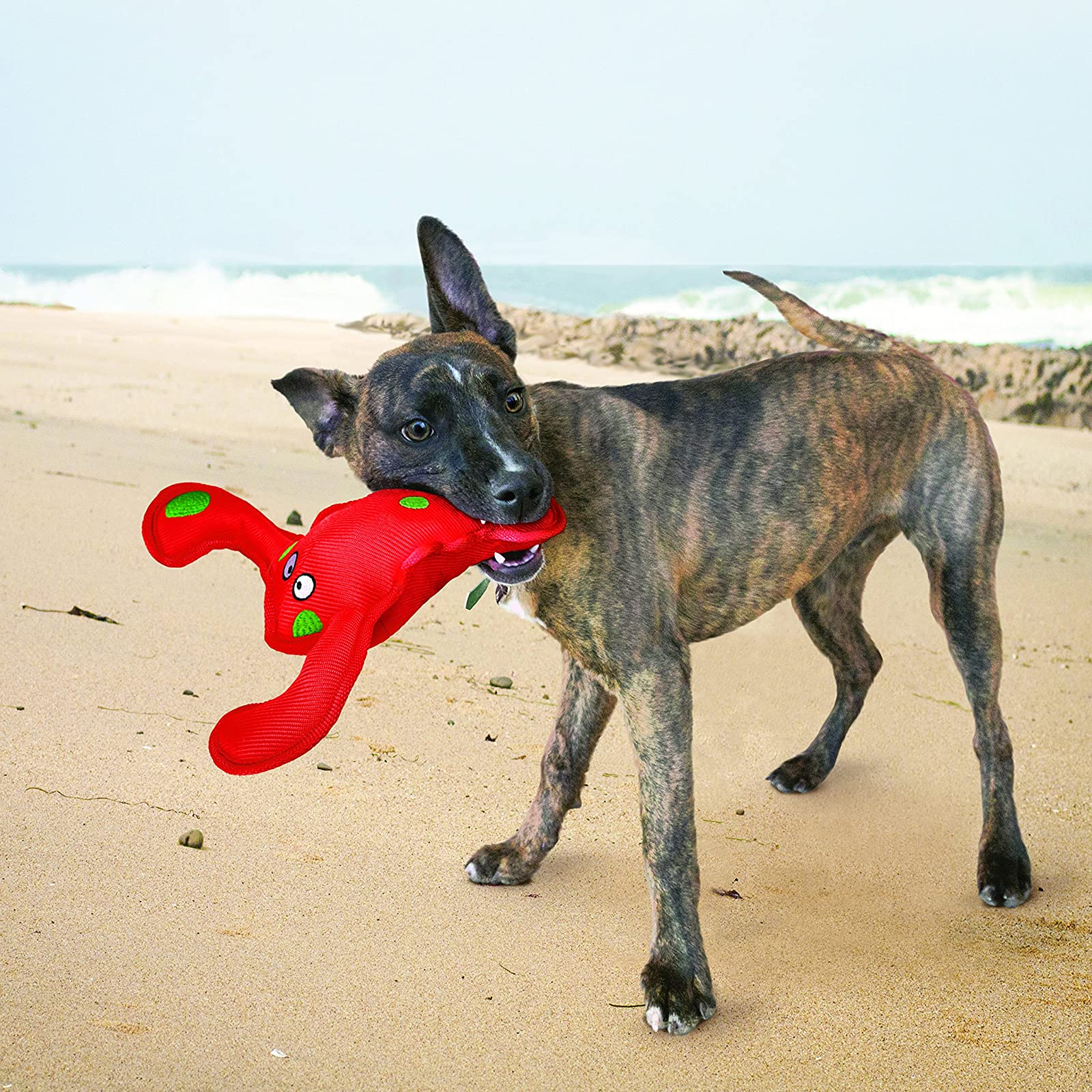 KONG Belly Flops Lobster Dog Toy RBF1 - 1