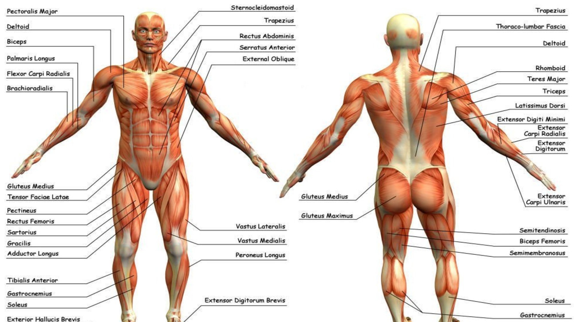 Amazon Anatomy Appstore For Android