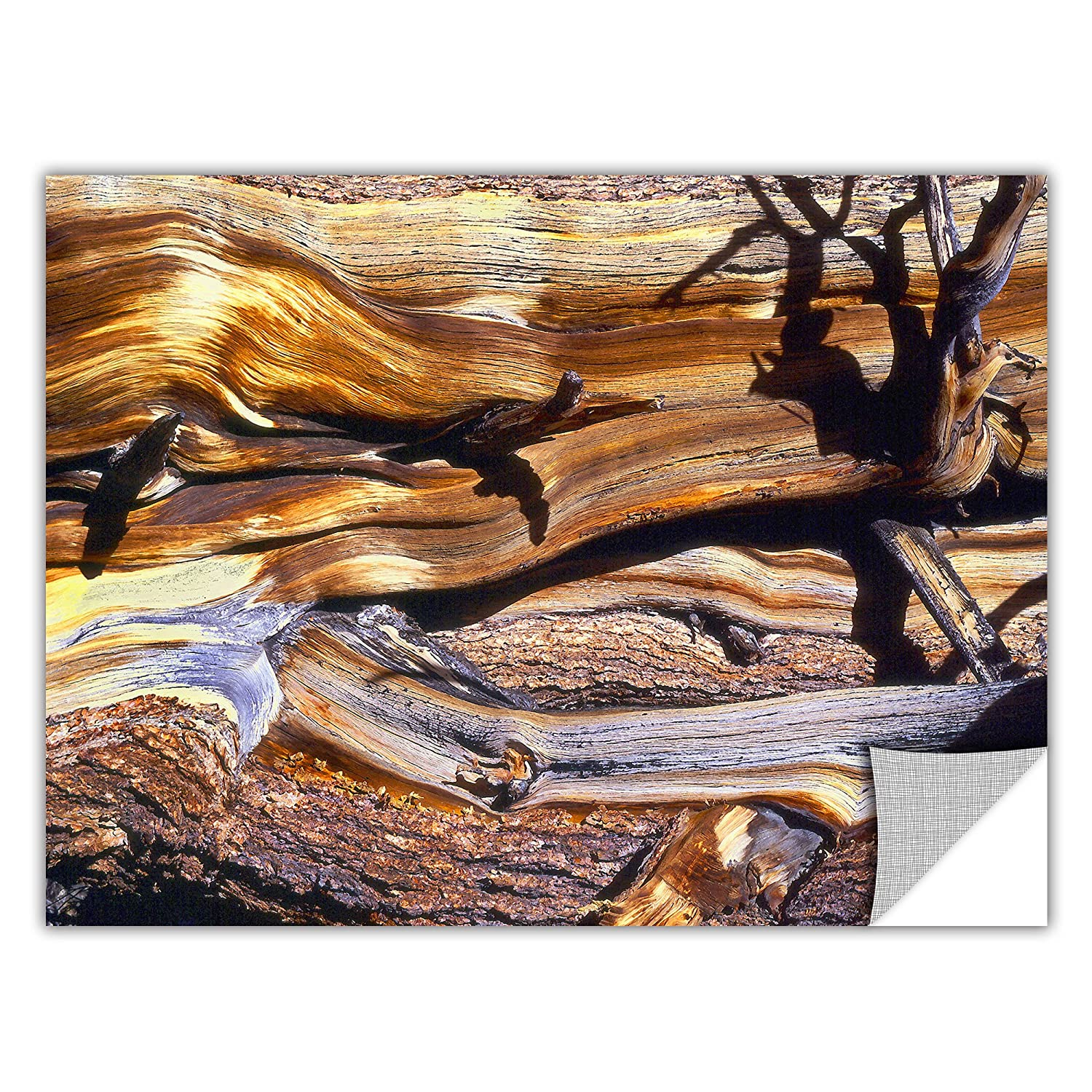 24 by 32-Inch ArtWall Ancient Bristlecone Removable Wall Art by Dean Uhlinger
