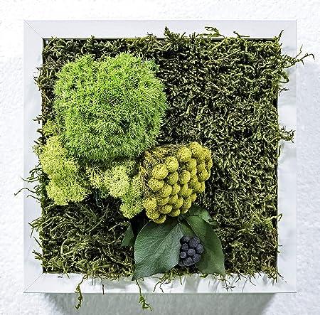 Mi Jardín Vertical Musgo Preservado Cuadro Vegetal 23 x 23 cm (Soho): Amazon.es: Hogar