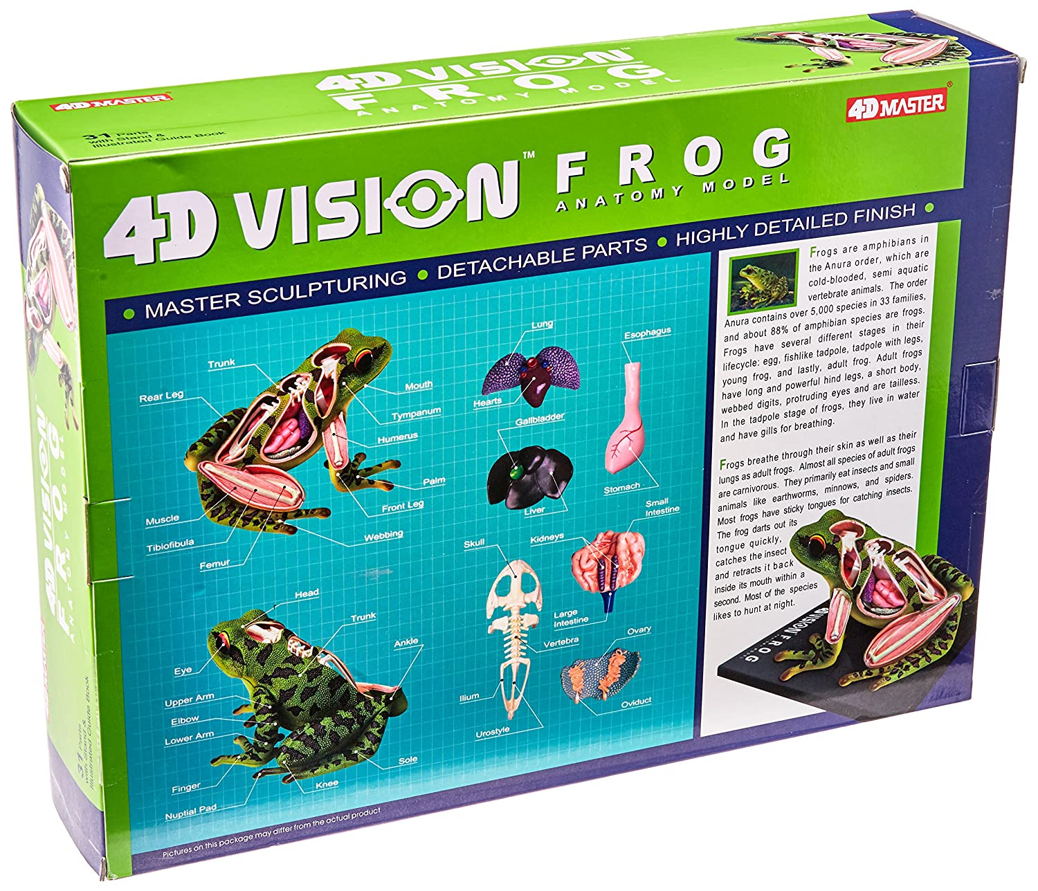 Amazon 4d Vision Frog Anatomy Model Toys Games