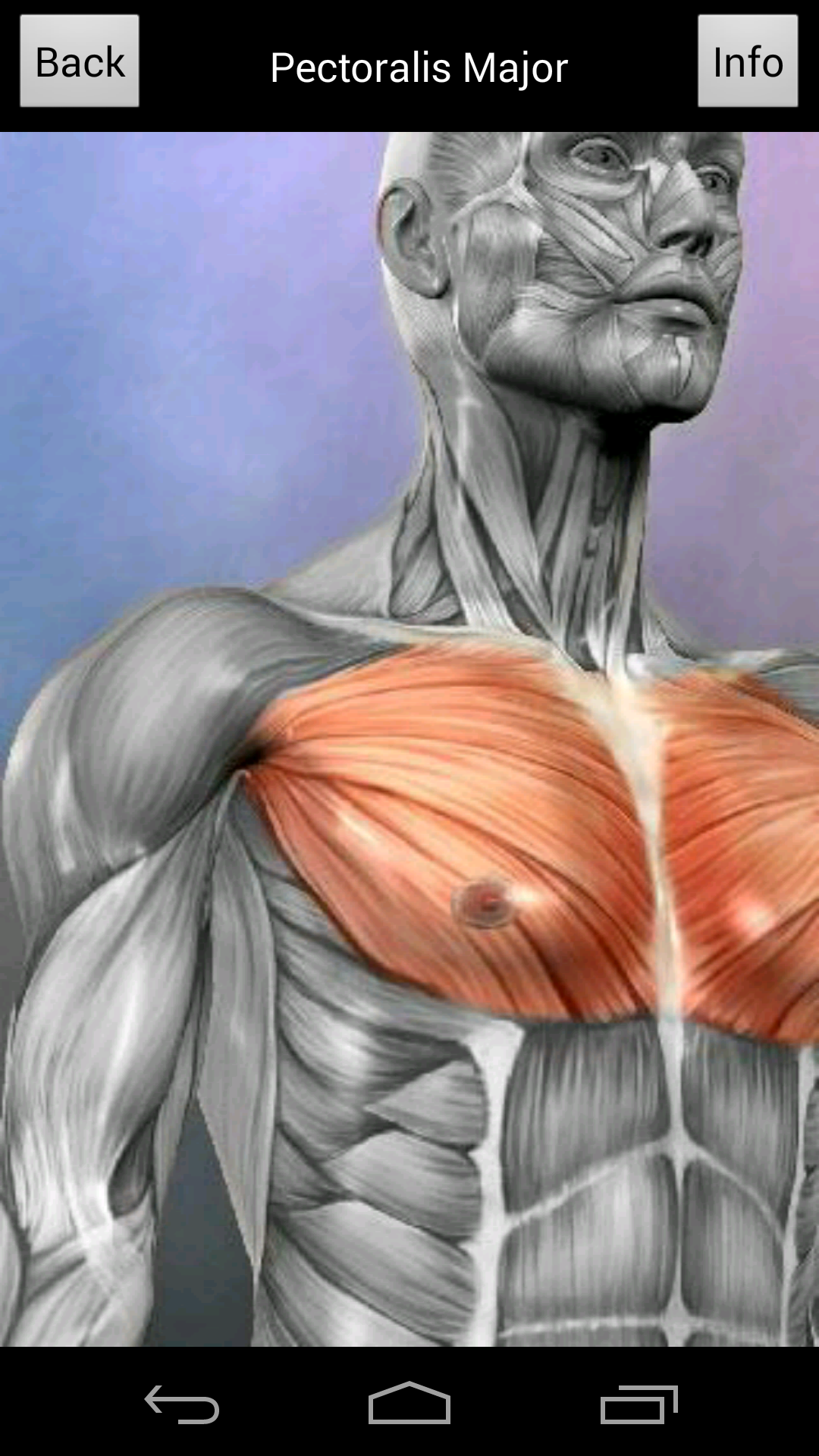 Learn Muscles Anatomy Import It All