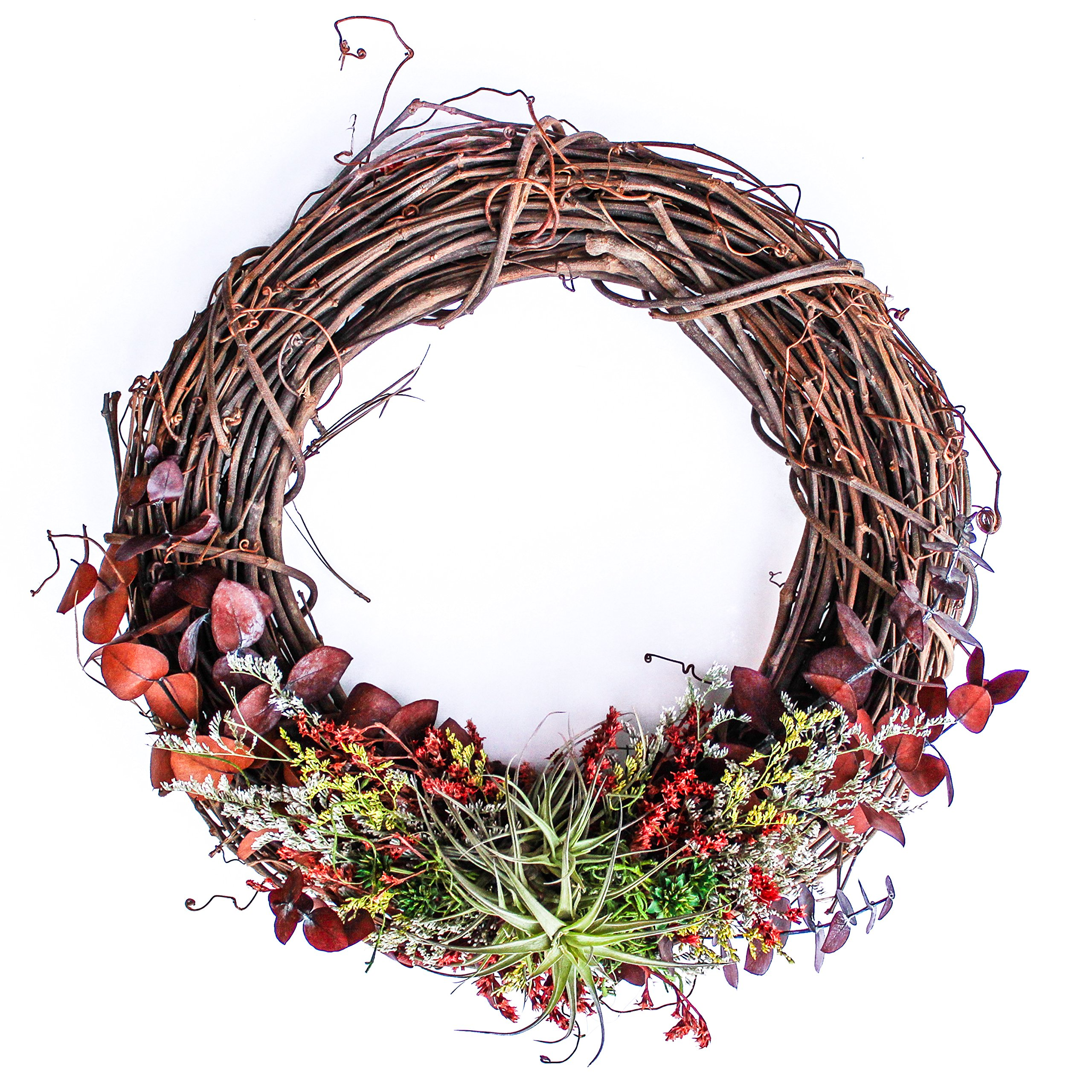 """Furrow & Vine – Fresh and Living Air Plant Grapevine Wreath (14"""" Natural) – Handcrafted in the USA – Decorates any Door or Wall Inside or Outside"""
