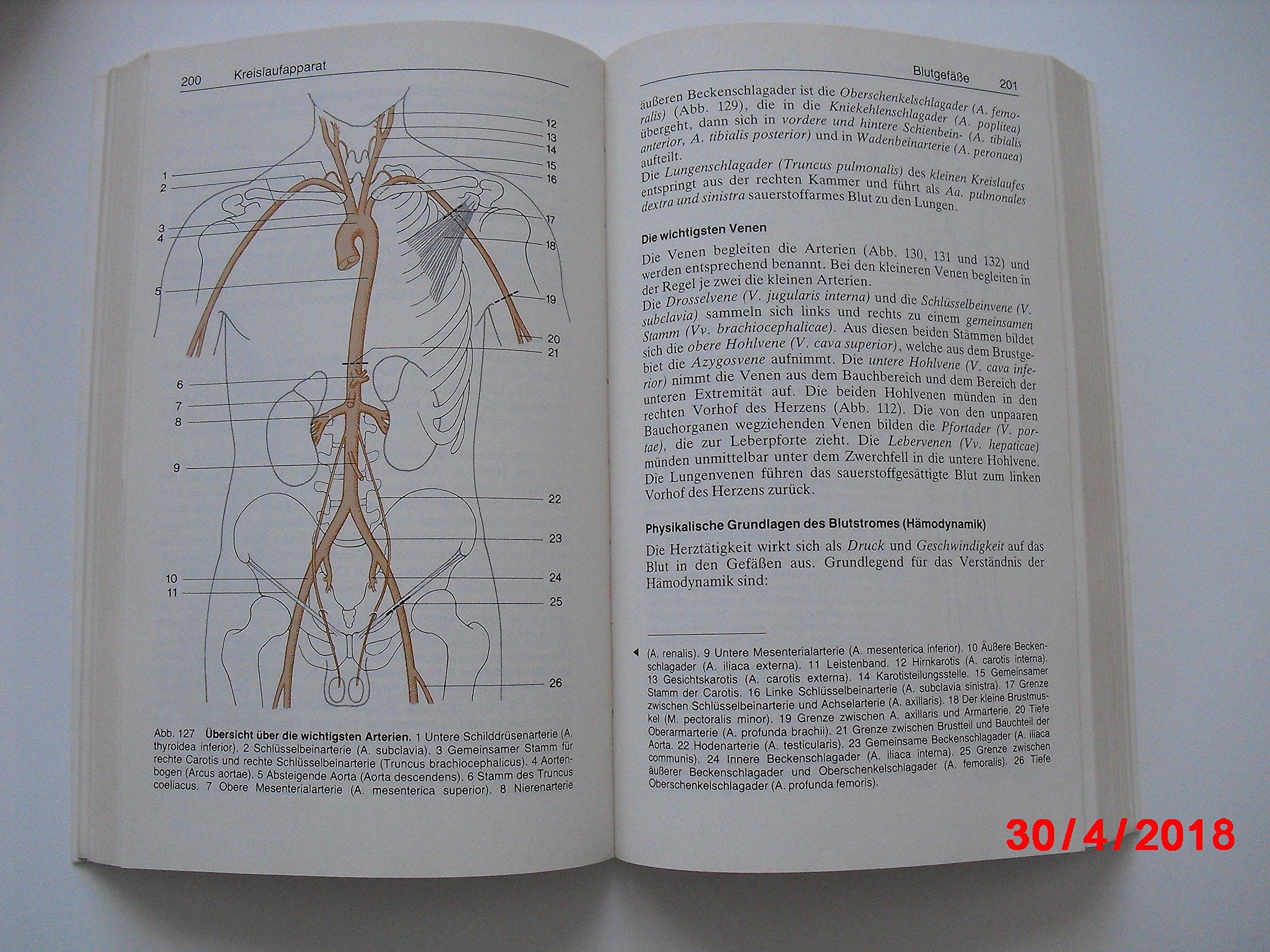 Groß Absteigende Aorta Anatomie Galerie - Menschliche Anatomie ...