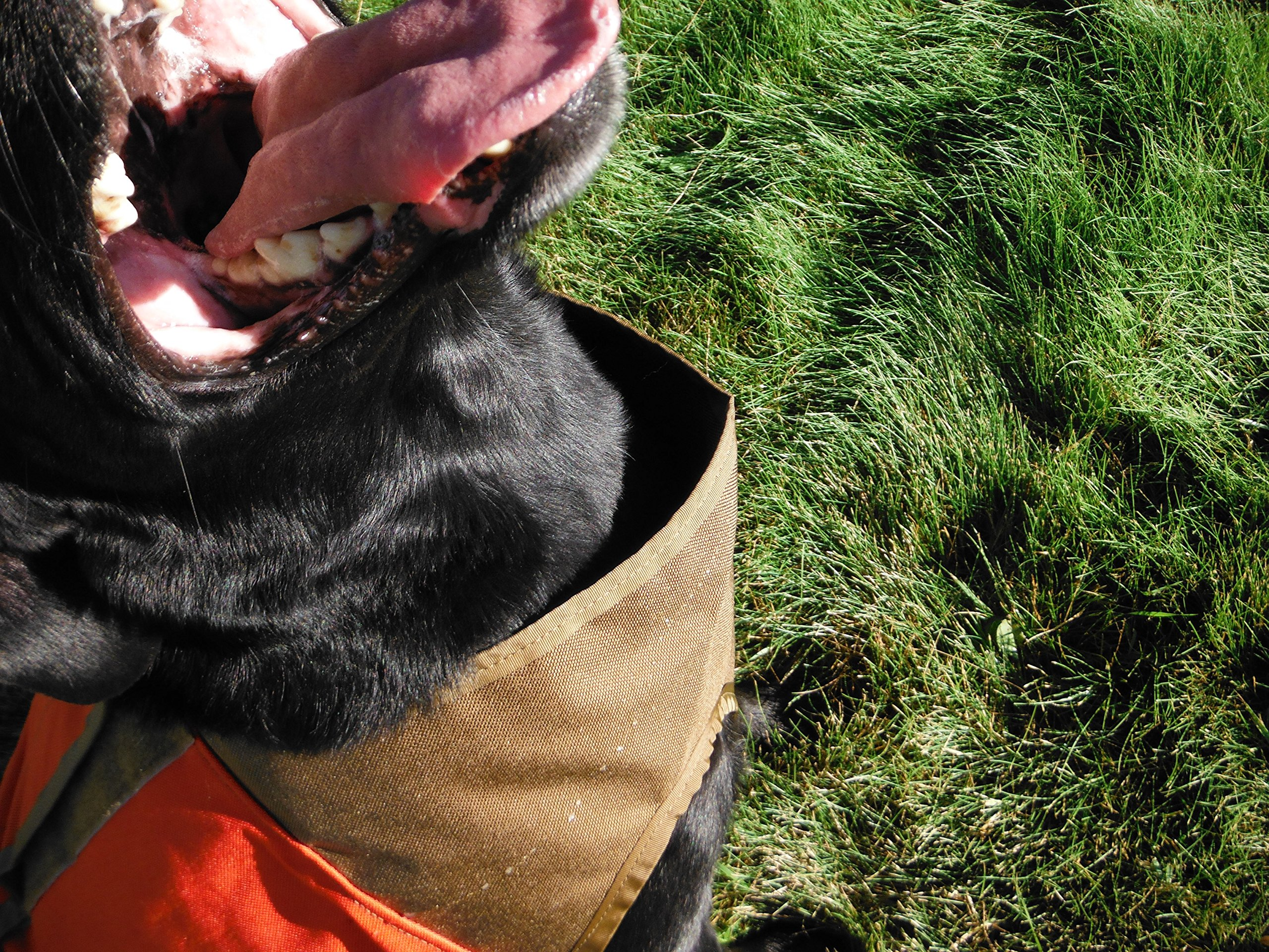 CUGA VEST Serious Protection for The Active Dog (XSML-SML, Orange/Tan) by CUGA VEST (Image #6)