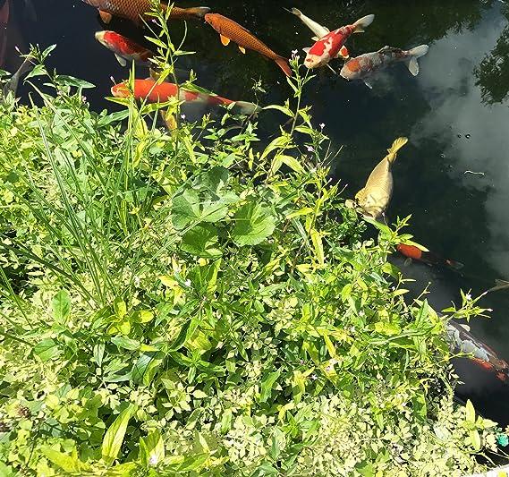 25 Pflanzen Teichpflanzen Bepflanzung Teich Pflanzeninsel Set rund 120 cm inkl